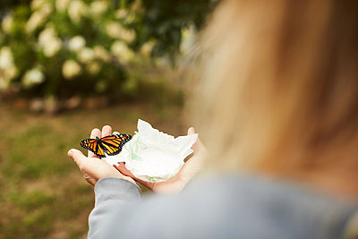 Monarch butterfly on tissue in palm - p924m2091386 by heshphoto