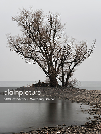 Tree at the lake - p1383m1548158 by Wolfgang Steiner