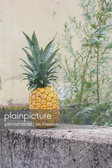 Pineapple on concrete ledge - p301m2123162 by Iris Friedrich