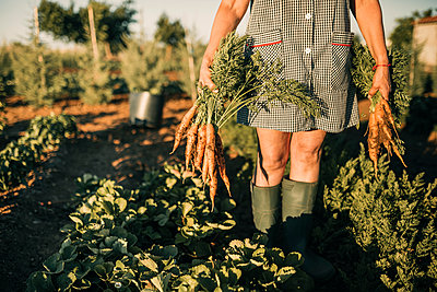 Female farm worker picking carrots at plantation - p300m2293519 by LUPE RODRIGUEZ