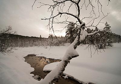 p1457m1514282 by Katrin Saalfrank