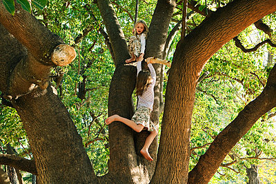Girls playing in tree - p4297046 by Clarissa Leahy