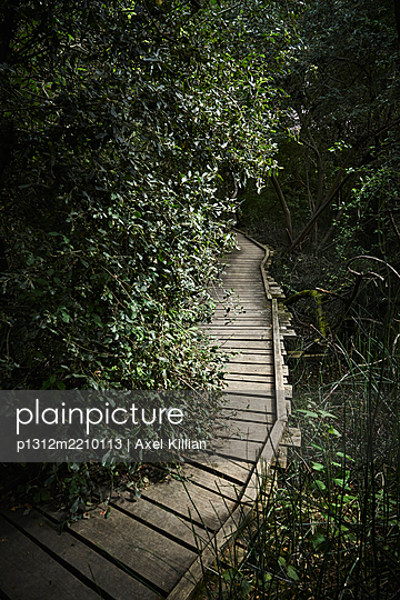 Planked footpath in coniferous forest - p1312m2210113 by Axel Killian