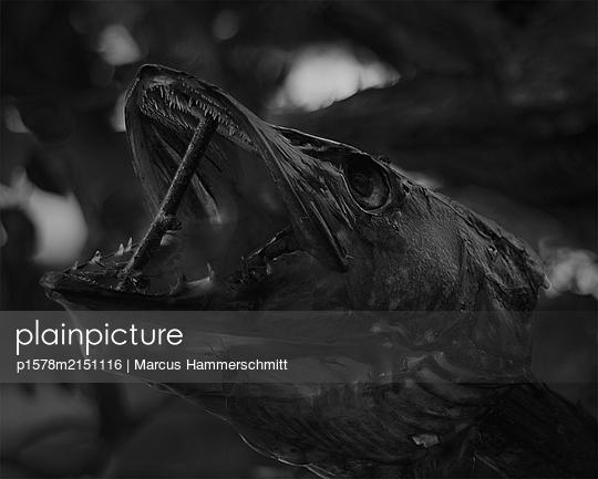 Großes Maul - p1578m2151116 von Marcus Hammerschmitt