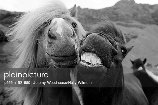 Close up of faces of horses - p555m1521580 by Jeremy Woodhouse/Holly Wilmeth