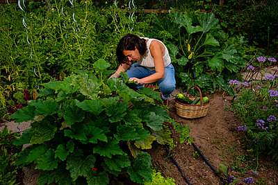 Woman kneeling in a bed behind a courgette plant - p1579m2195705 by Alexander Ziegler