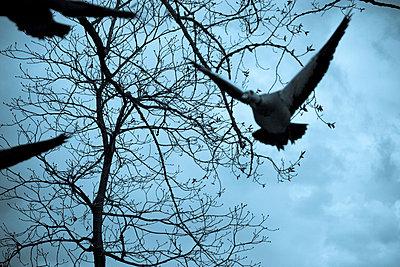 Fliegende Gänse - p4170140 von Pat Meise