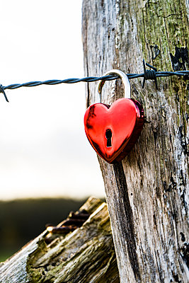 Barbed wire with Love lock - p075m2229472 by Lukasz Chrobok