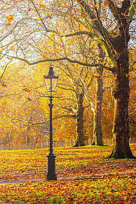 UK, England, London, Green Park in Autumn - p651m2062145 by Alan Copson
