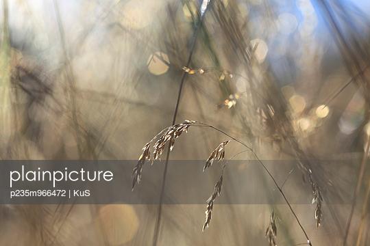 Gras in einer Sommerwiese - p235m966472 von KuS
