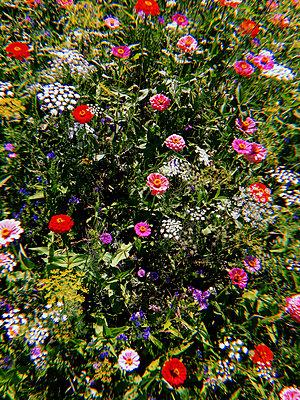 Flowering perennials - p1189m2263787 by Adnan Arnaout