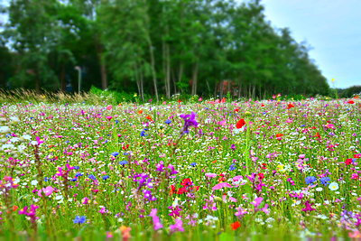 Flower field - p148m2111284 by Axel Biewer