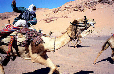 desert (southern sinai, egypt) - p5677876 by Scarlett Coten