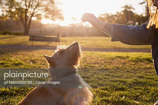 A dog plays with its owner in the city park of Buenos Aires - p1166m2255785 by Cavan Images