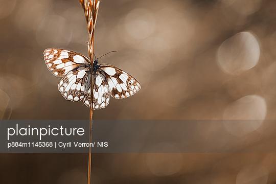p884m1145368 von Cyril Verron/ NIS