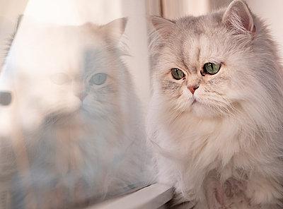 Cat sitting on windowsill - p299m2087230 by Silke Heyer