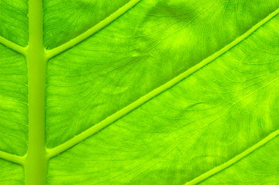 Green leaf, close-up - p4342178f by Perfect Pictures