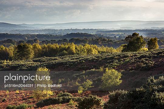 Ashdown Forest - p1516m2044031 von Philip Bedford