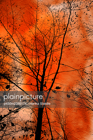 Silhouettes of trees - p450m2295174 by Hanka Steidle
