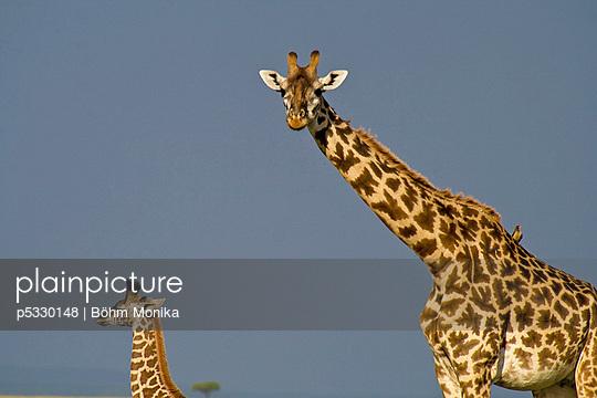Giraffe - p5330148 by Böhm Monika