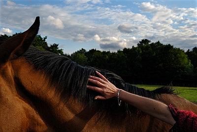 Frau streichelt Pferd - p491m1132539 von Ernesto Timor