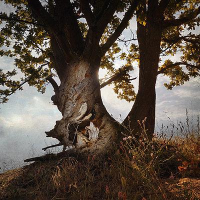 A Second Childhood - p1633m2208919 by Bernd Webler