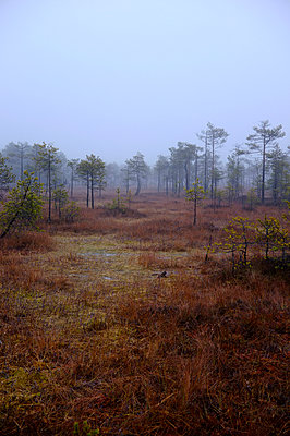 Wetland - p971m952925 by Reilika Landen