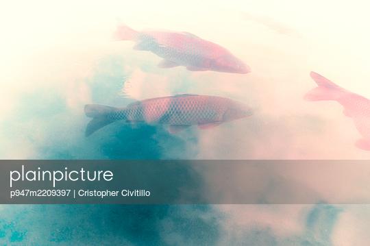 Three carps - p947m2209397 by Cristopher Civitillo