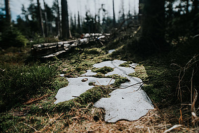 Melting snow in Harz National Park  - p1184m1222754 by brabanski
