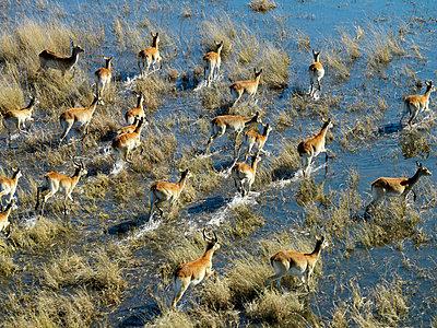 Antelope - p6520158 by Nigel Pavitt