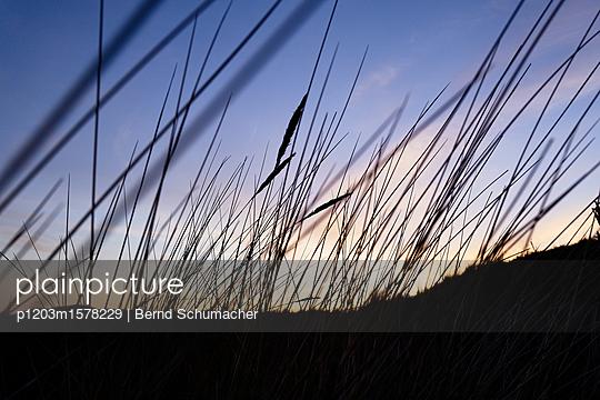 Dünenlandschaft bei Sonnenuntergang - p1203m1578229 von Bernd Schumacher