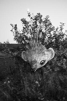 Hedgehog - p1661m2245382 by Emmanuel Pineau