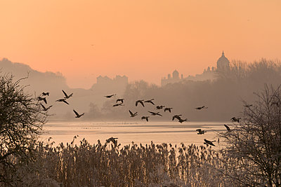 A misty sunrise over the Great Lake on the Castle Howard Estate, North Yorkshire, Yorkshire, England, United Kingdom, Europe - p871m1225095 by John Potter