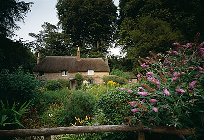Hardy's Cottage, Wessex. - p8551922 by Joe Cornish