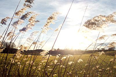 Sun and wind - p1657m2248620 by Kornelia Rumberg