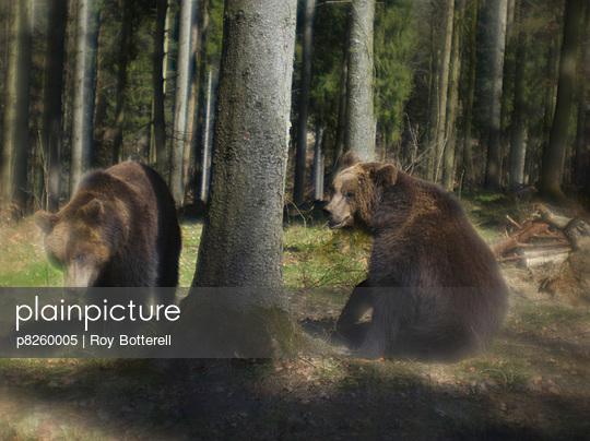Zwei Bären im Wald - p8260005 von Roy Botterell