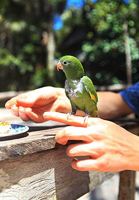 Vogel wird gefüttert - p045m1017184 von Jasmin Sander