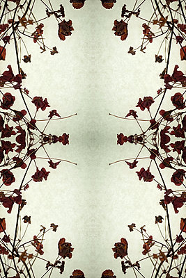 Abstract kaleidoscope of dried red leaves and stems of wood sorrel plant creating pattern around edge of frame - p1047m2134855 by Sally Mundy