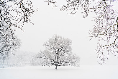 Bare trees on snow covered field during snowfall - p1166m1577395 by Cavan Social