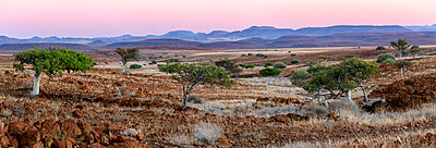 Desert scenery, Desert Rhino Camp, Palmwag Concession, Namibia.  - p1403m1482769 by Education Images