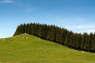 Waldrand - p813m1039468 von B.Jaubert