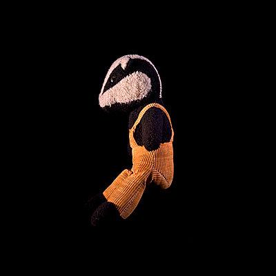 Badger Against Black Background - p1072m906781f by Caro Boulton