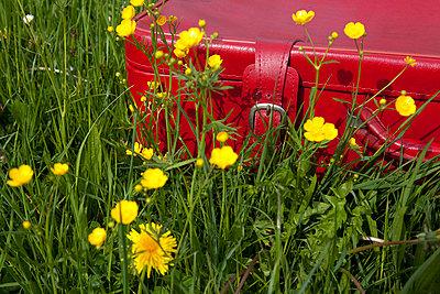 Koffer - p4541291 von Lubitz + Dorner