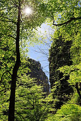 im Frühlingswald - p606m1462353 von Iris Friedrich