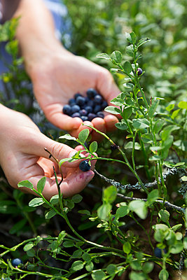 Blueberries on hand - p312m1521885 by Lena Granefelt