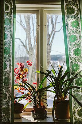 Plants in pots on window sill - p312m2051537 by Matilda Holmqvist