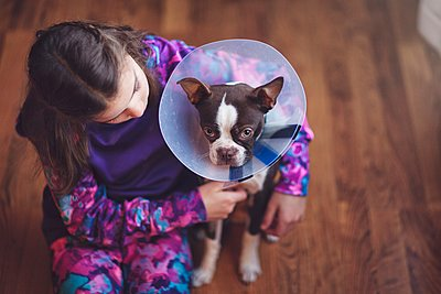 Girl comforting Boston Terrier puppy wearing pet cone - p924m1125627f by Rebecca Nelson