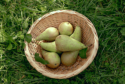 Basket of pear on grass - p300m2276109 by Katharina Mikhrin