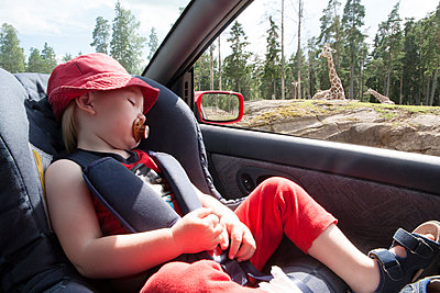 Girl sleeping in car while giraffes are visible in background - p312m1121772f by Anders Modig
