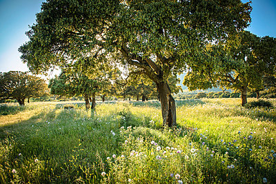 Summer - p936m939712 by Mike Hofstetter